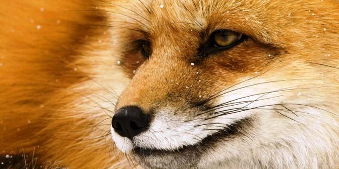 Звуки животных в английском языке