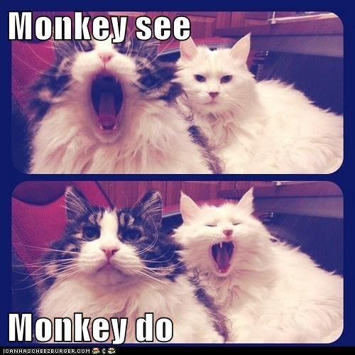 monkey_see