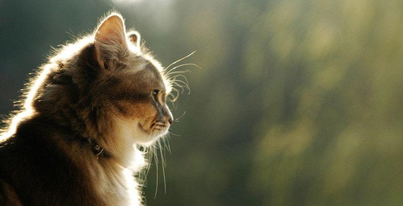 Bell the cat и другие английские идиомы с кошками